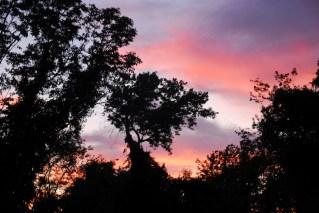 Nikon sunset