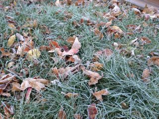 frosty2