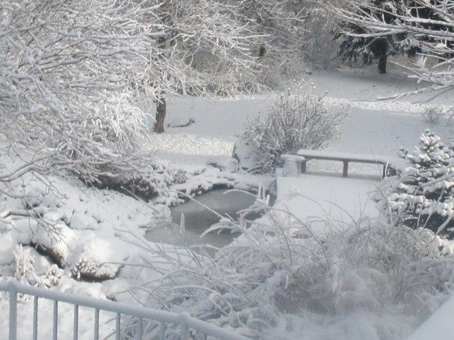 Snow and the fish pond