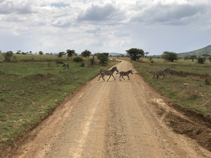 Driving the Serengeti