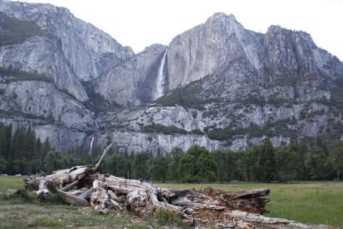 Yosemite Valley Meadows