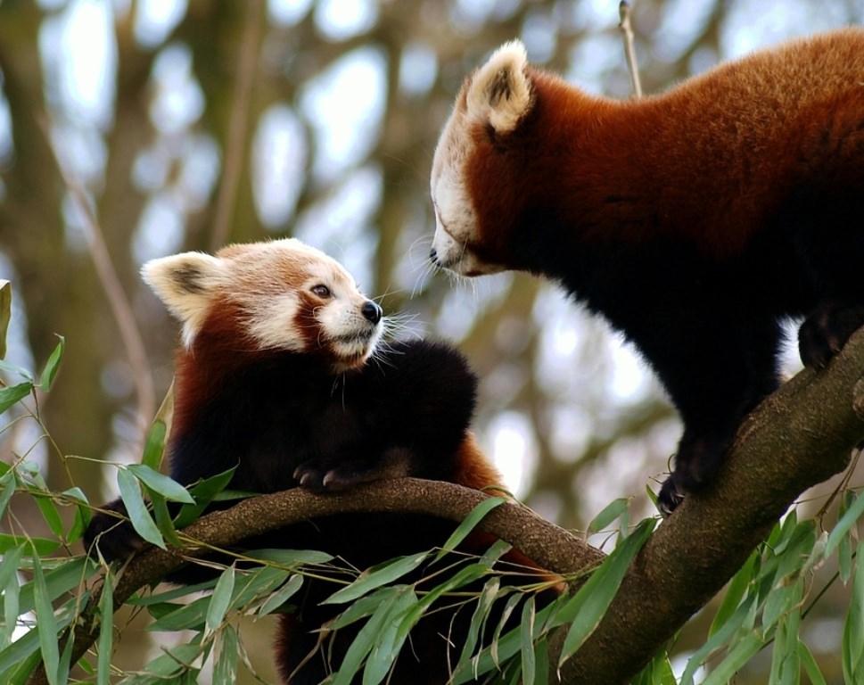 ฤดูการสูญเสียน้ำหนักมาก 5 จอนและหมีแพนด้า
