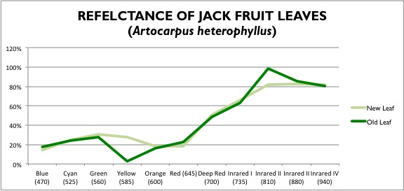Reflectance readings from two jack fruit leaves (one old and one new).