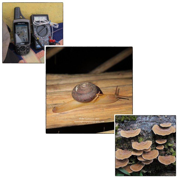 Appreciating abiotic factors and the role of decomposers: snapshots from the study on the slopes of Sri Pada.