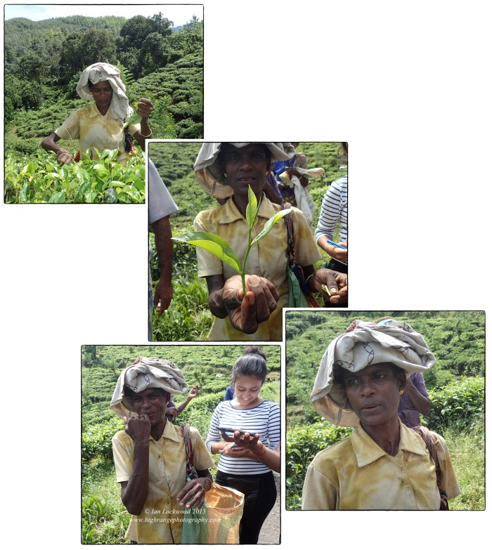 Series on a tea planter being interviewed by OSC students near Kitulgala.