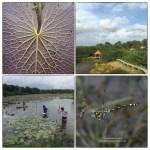 wetlands-collage3-100-dpi