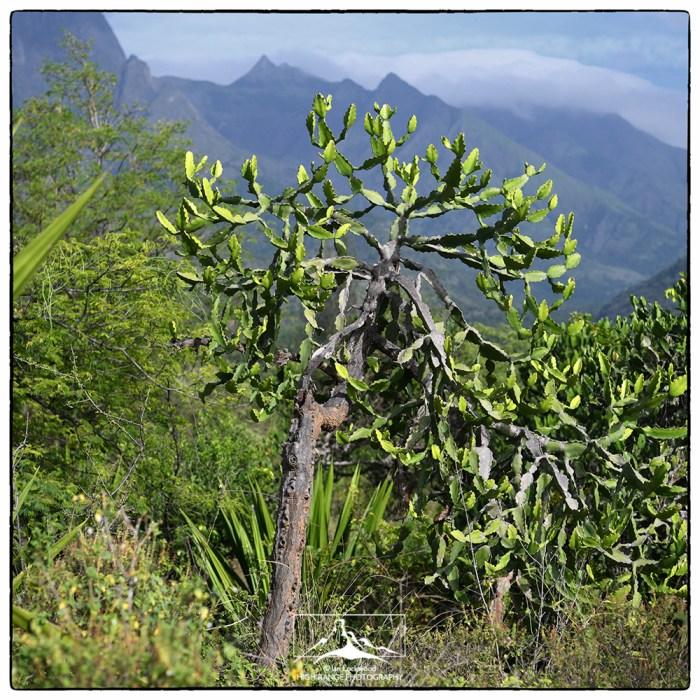 Euphorbia_on_Kurangani_road_(AM)_1a(MR2)(06_18)