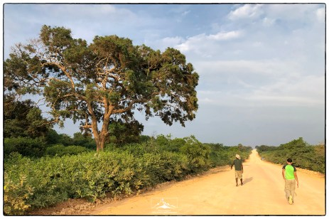 Looking for chameleons on the road to the Aruwakkalu limestone quarry.
