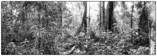 Inside the primary forests of Thattekad.