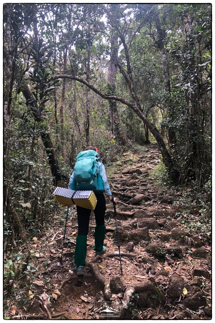 Forest trail up to Sri Pada. It gradually transitions from montane to cloud forest with slight differences in plant composition and canopy height that are mostly imperceptible. (January 2020)