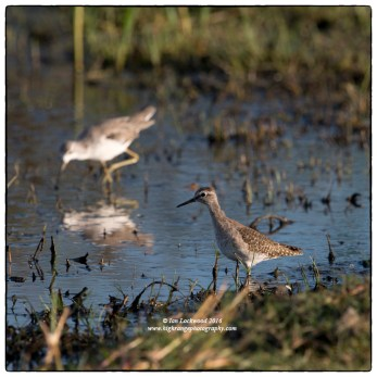 Waders at Vankalai