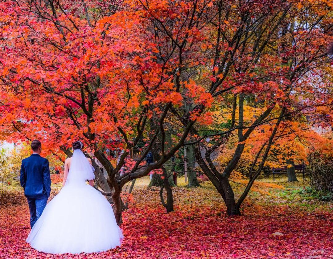 Ai nuntă toamna? Ce aranjamente florale să alegi în funcție de lună