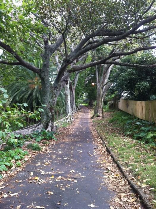 Western Park Auckland
