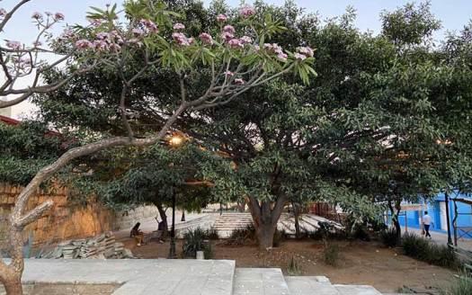 jardin antonia labastida oaxaca