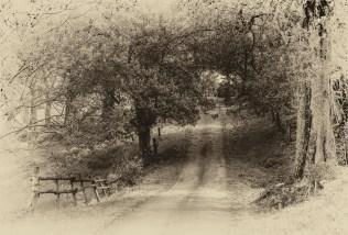 beefsteak-road-2016ni-006m-17x25