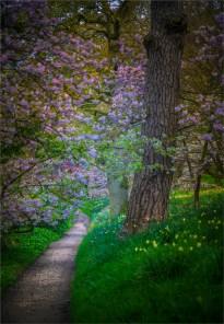 Mintern-Gardens-2017-ENG052-18x26