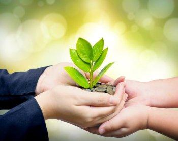 hands nurturing green plant light background