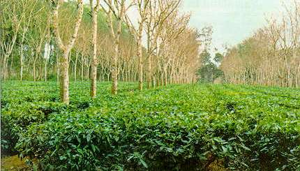National Agroforestry Policy, 2014