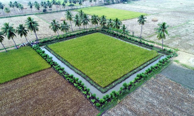 [Premium] Zero Budget Natural Farming – The Key to Sustainable Agriculture