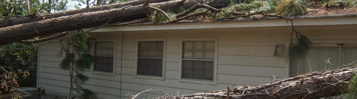 Important things to know when purchasing homeowner's insurance such as this tree on this house.