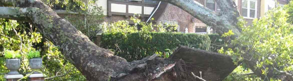 Neighbor's Tree Fell On My House, now what?