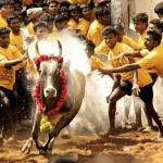 jallikattu-Everything you need to know?
