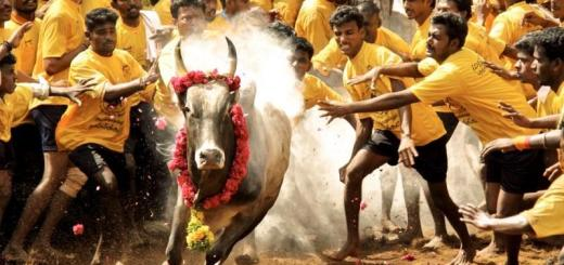 jallikattu-Everything you need to know