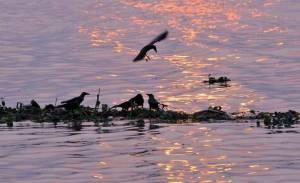Ganga pollution analysis