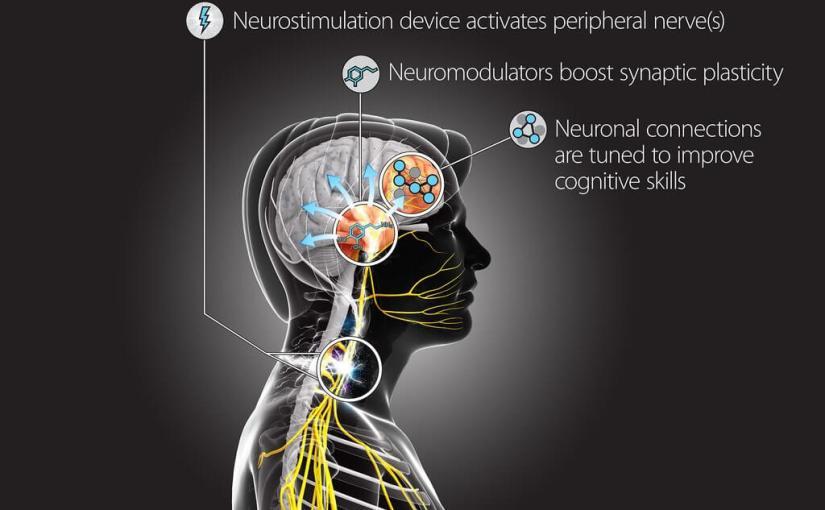 Stimuler la plasticité synaptique pour accélérer l'apprentissage
