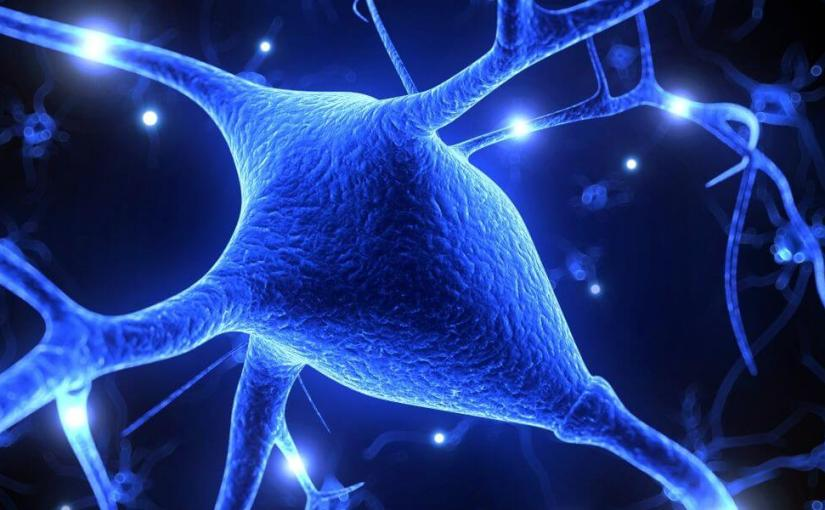Un médicament pour empêcher le développement des maladies neurodégénératives du cerveau