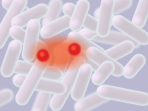 Distant partners. In this sketch, two cesium atoms in high Rydberg states form a weakly bound molecule about 1 micrometer across, comparable to the size of typical bacteria. [Credit: APS/Alan Stonebraker]