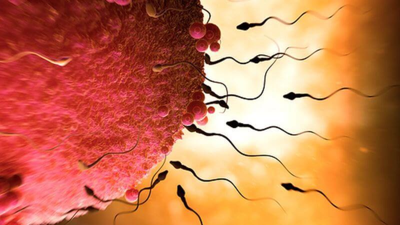 Faire des bébés sans ovules serait possible, disent les scientifiques