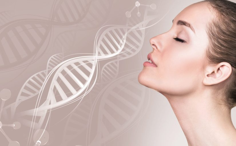 Une thérapie génique pour allonger la durée de vie