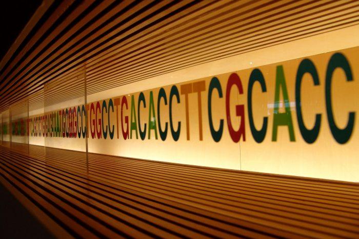 Bébés adn modification génétique
