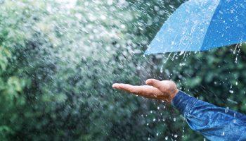 pluis