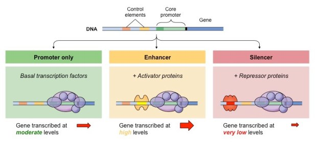 Gene Identification | BioNinja