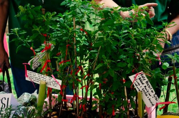ibaan municipal agriculture office organic products mayor danny toreja ethel joy caiga salazar 9