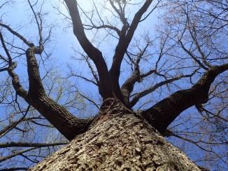 Tree, human view