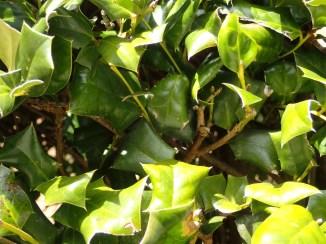 Green shrub, human view
