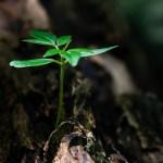 Columnist Forum - Spiritual Growth - Carol Clemans