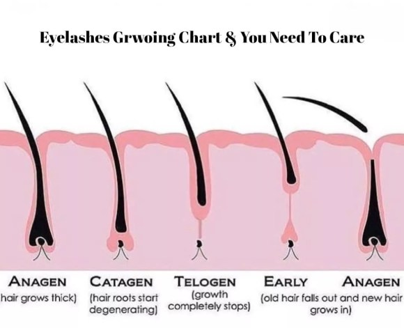how long does it take eyelashes to grow back-ibeautyguide