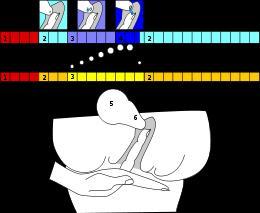 Manera correcta de obtener el Moco o flujo vaginal