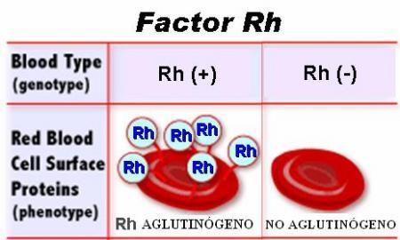 Aglutinógeno su ausencia determina el Rh negativo