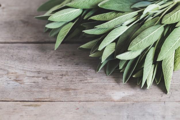 فوائد عشب المرمرية