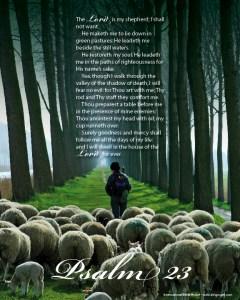 8_Ps23_sheep[1]