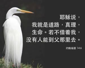 Chinese-John-146-egret[1]