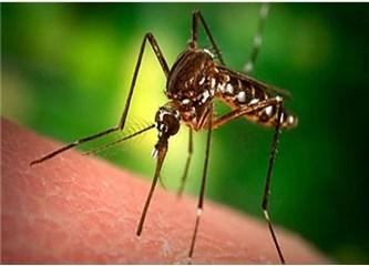 Sivrisineğin akılalmaz kan emme taktiği!