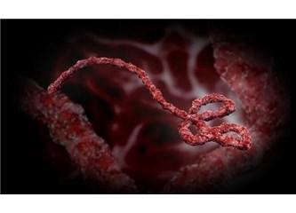 800 nanometre boyunda insanları çaresiz bırakan Ebola virüsündeki aklın kaynağı ne?