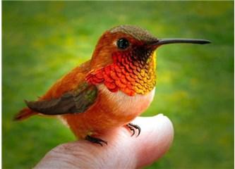 3 gr. ağırlığındaki küçücük sinek kuşunun nasıl insandan güçlü hafızası olur?