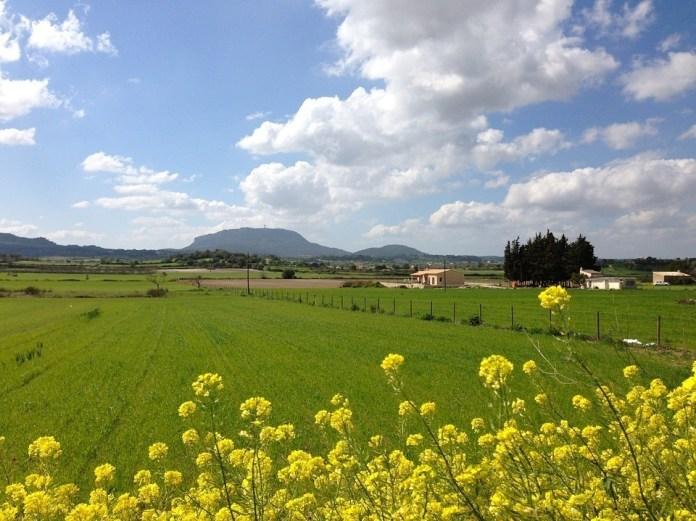 Primavera Mallorca